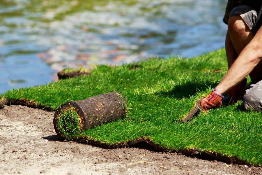 Low-Maintenance Warm Season Grass