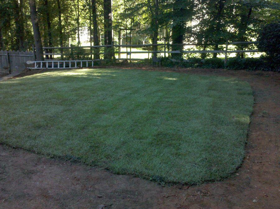 Warm Season Turf Grass