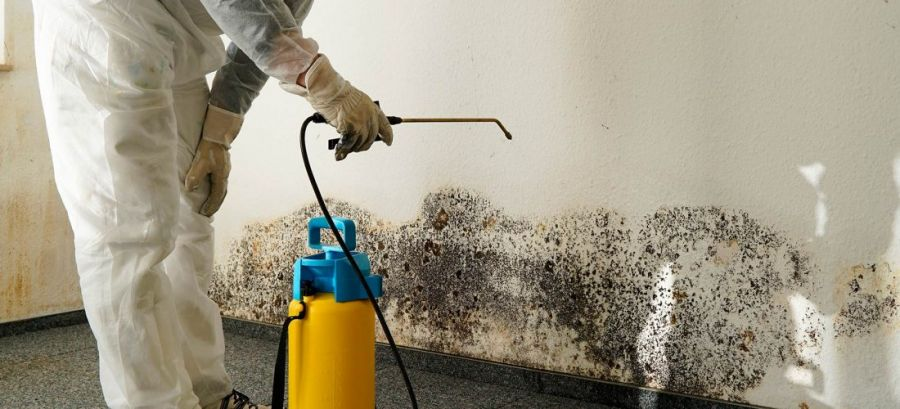 Mold cleanup is best left to professionals