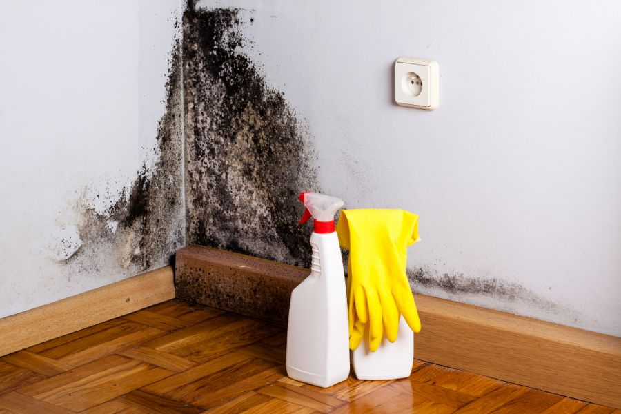 Home remedies are no match for mold