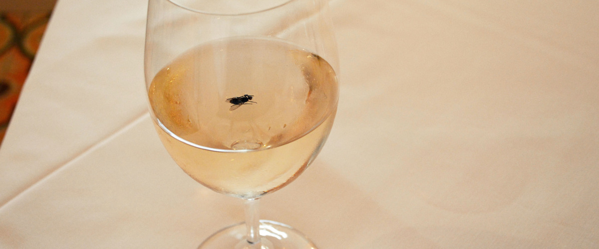 A Black Fly in My Chardonnay