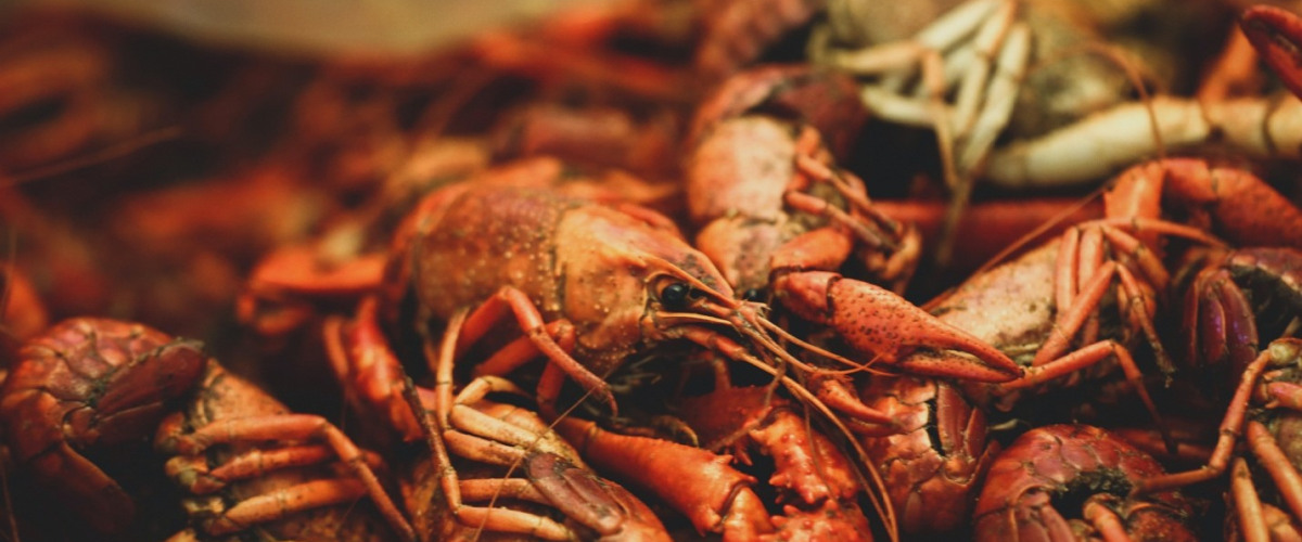 100 New COVID-19 Cases Reported at Three Louisiana Crawfish Farms