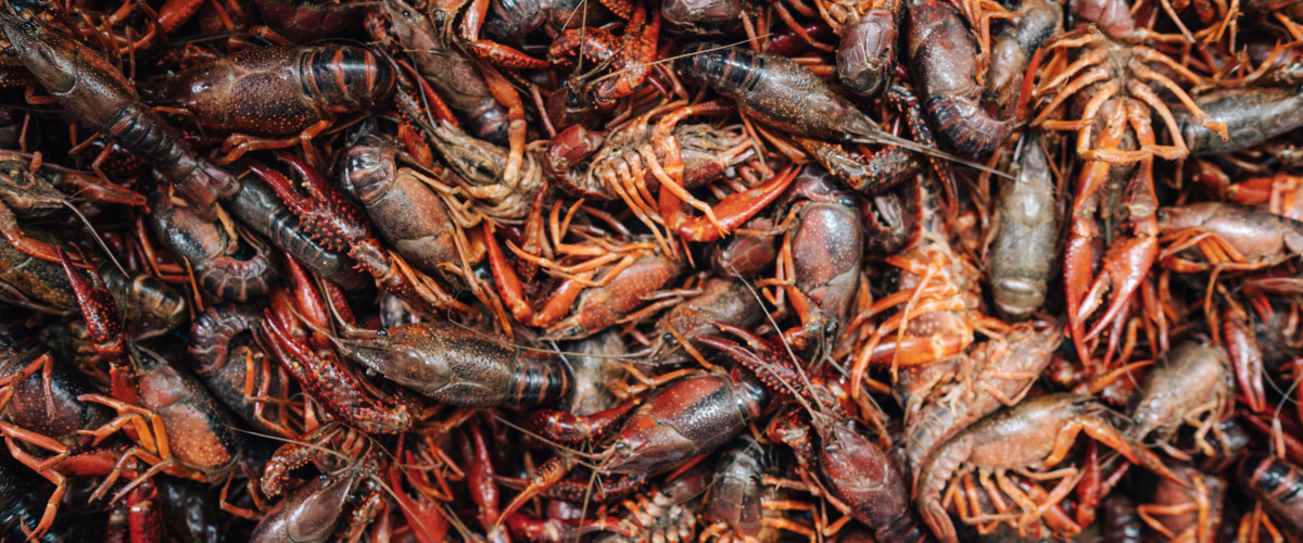 Seafood Sellers Take on Big Year for Crawfish