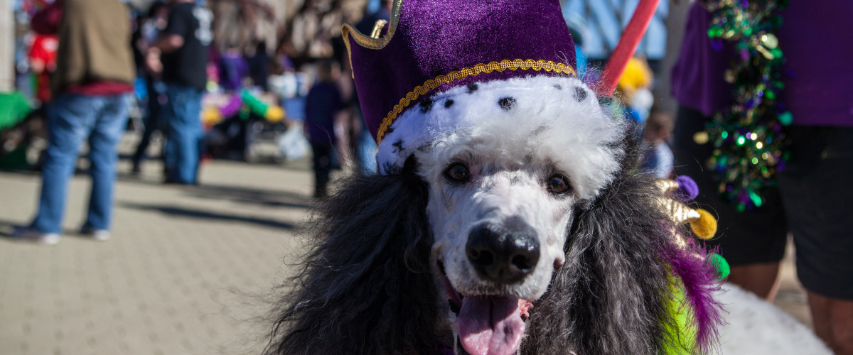 MUTTY GRAS: Krewes of Barkus and Mardi Paws