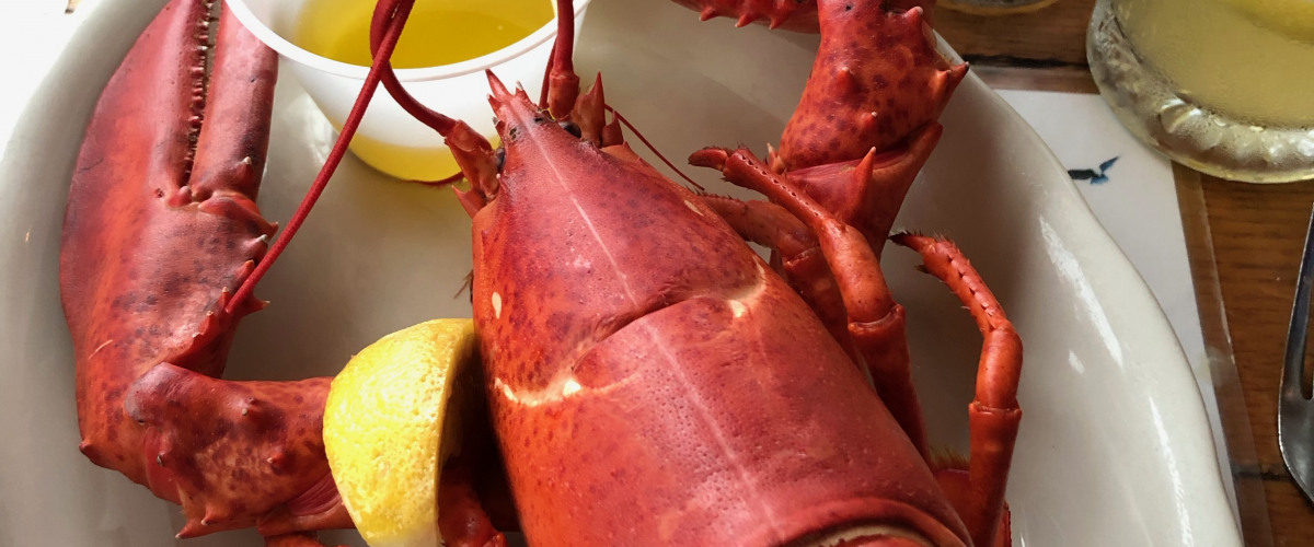 Maine: Land of the Giant Crawfish