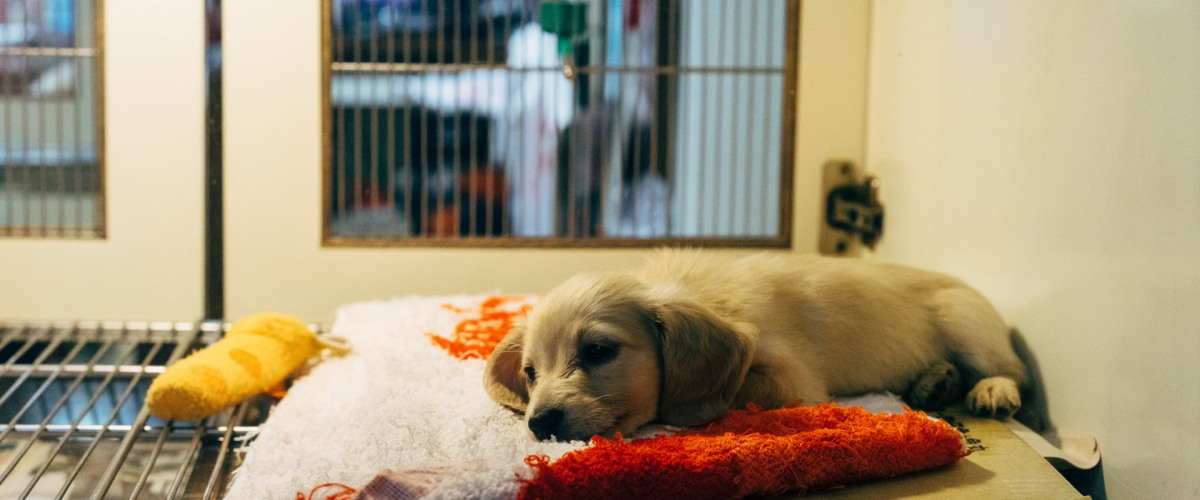 Support the Animal Rescue New Orleans with Its Christmas in July Silent Auction!