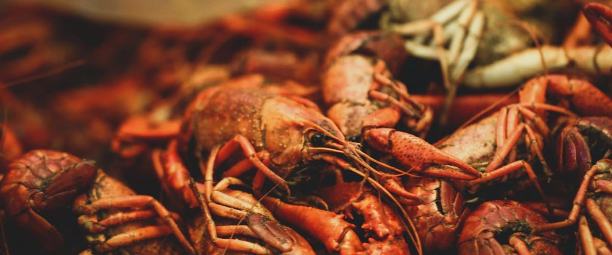 NOLA Crawfish Festival Provides Music and Tons of Crawfish During Hard Times