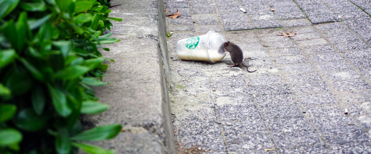 Social Distancing Takes Toll on City?s Rodents. Check Out What NOLA Did Next.