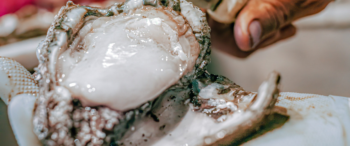 The Louisiana Shell Game: 2020 Oyster Outlook