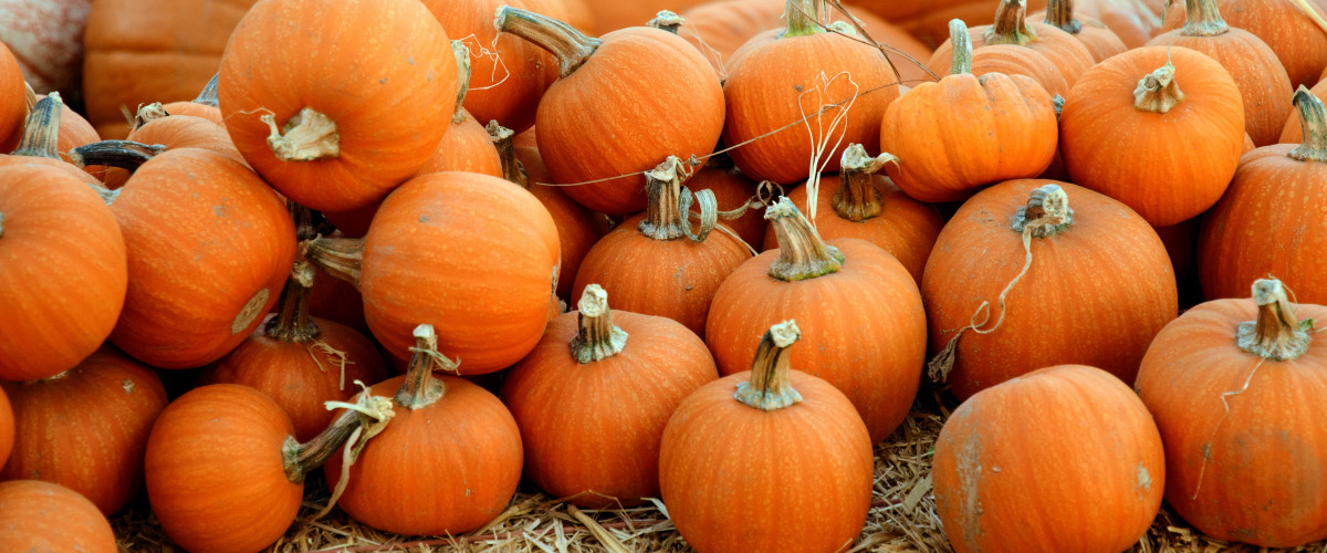 Plans for a Homebound Halloween