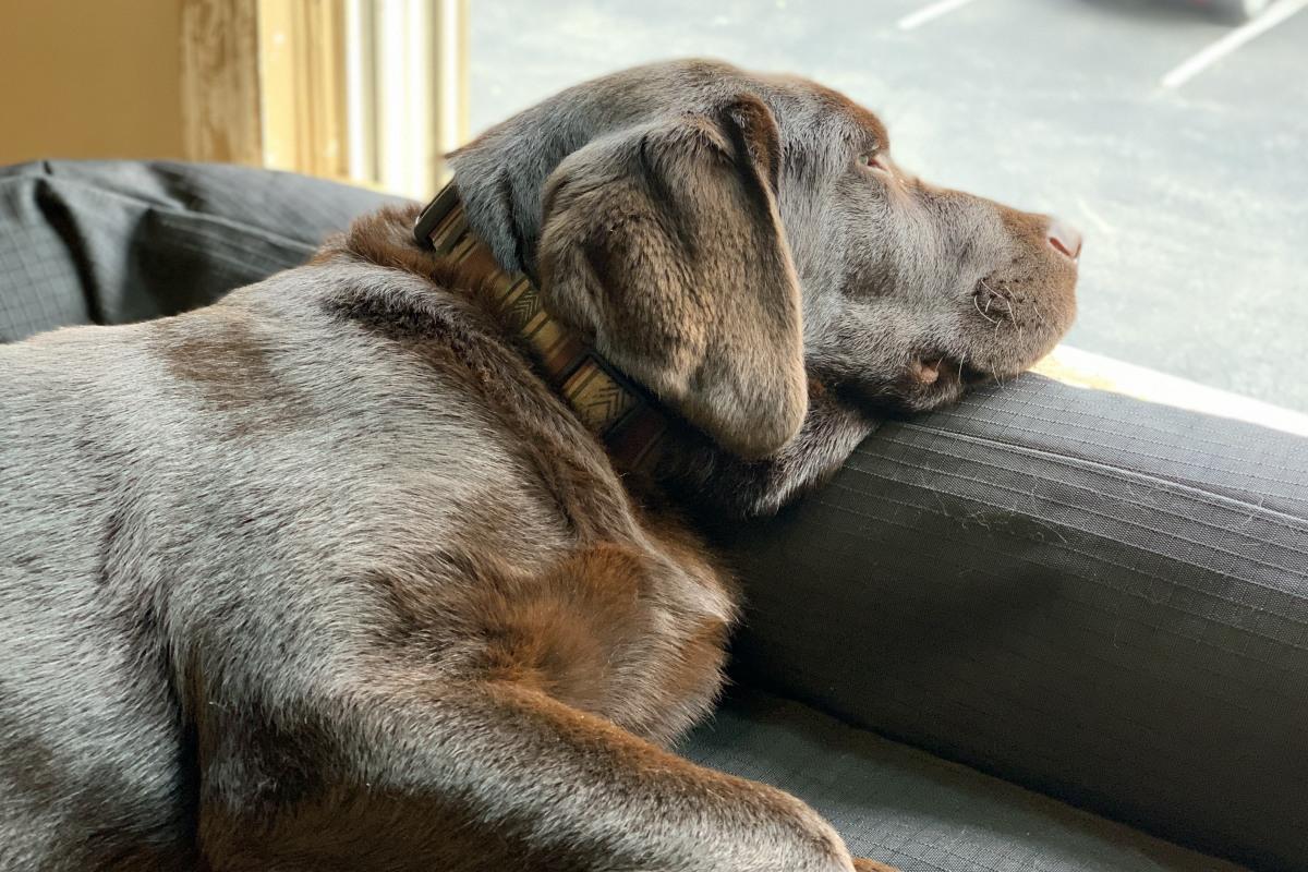 Saturn Freight's Watch Dog