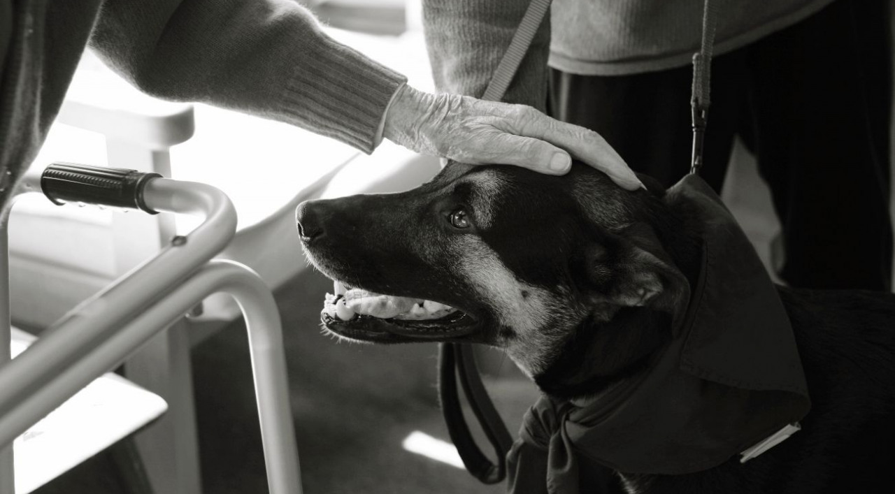 Service Animal Certification