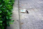 Aw, Rats! New Orleans Barely Misses Top 20 for Orkin?s Rattiest Cities