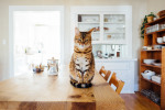 Five Vets That Would Love to Meet Your Cat for National Cat Day
