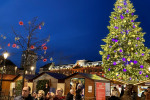 Where Can You Find the World?s Most Popular Christmas Trees?