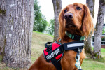 Why a Therapy Dog Might Be Just What You Need