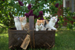 Another Chance at Nine Lives: Cat Adoption