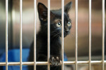 If You Lost Your Pet Because of Ida, the Louisiana SPCA May Have It