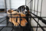 Pet Adoptions Help Fight the Corona-Lonelies