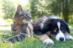Add A New Furry Friend to Your Family by Participating in National Adoption Weekend