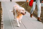 Doggone Thrilling Runs In The Neighborhood