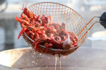 Louisiana Crawfish Industry Hit Hard by Pandemic Regulations