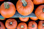 Five Places to Find the Perfect Pumpkin