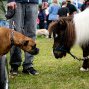 Pet Fest Urges Companion Seekers to #AdoptDontShop