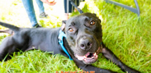 New Orleans Dogs Can Once Again Have Their Day ? At NOLA City Bark!