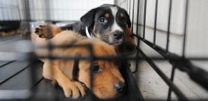 Pet Adoptions Help Fight the Corona-Lonelies