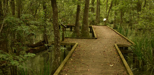 Baton Rouge is Greener Than You'd Think: Nature Sights to Visit in LA's Capital Area