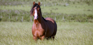 Hold Your Horses!: ?Say ?Hay? to Horses Equine Experience? is Coming This Weekend
