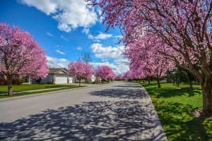 Neighborhood Must Haves When Shopping for a Home