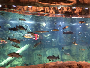 Dangerous Dive: Louisiana Man Charged for Jumping in Bass Pro Shop Aquarium