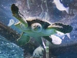 Joy to All the Fishes in the Audubon Aquarium