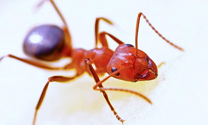 Ants: What You Need To Know