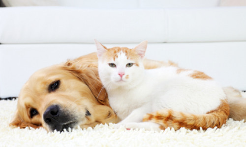 Pet Toys and Beds: How To Keep Pet Areas Clean And Fresh