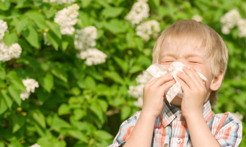Allergies: How a Professional Cleaning Can Help Control Pesky Symptoms