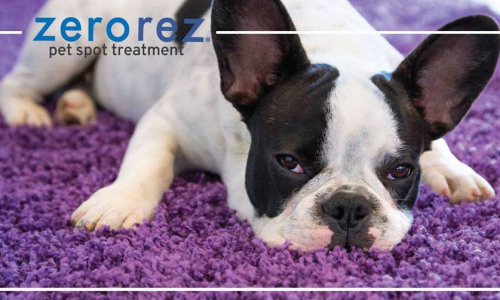 Our Newest Video: Pet Treatments the Zerorez Way!