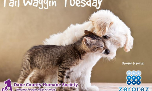 Tail Waggin' Tuesdays on 105.5 Triple M