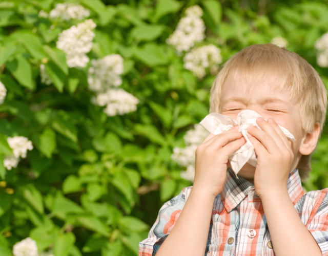 Image for Allergies: How a Professional Cleaning Can Help Control Pesky Symptoms