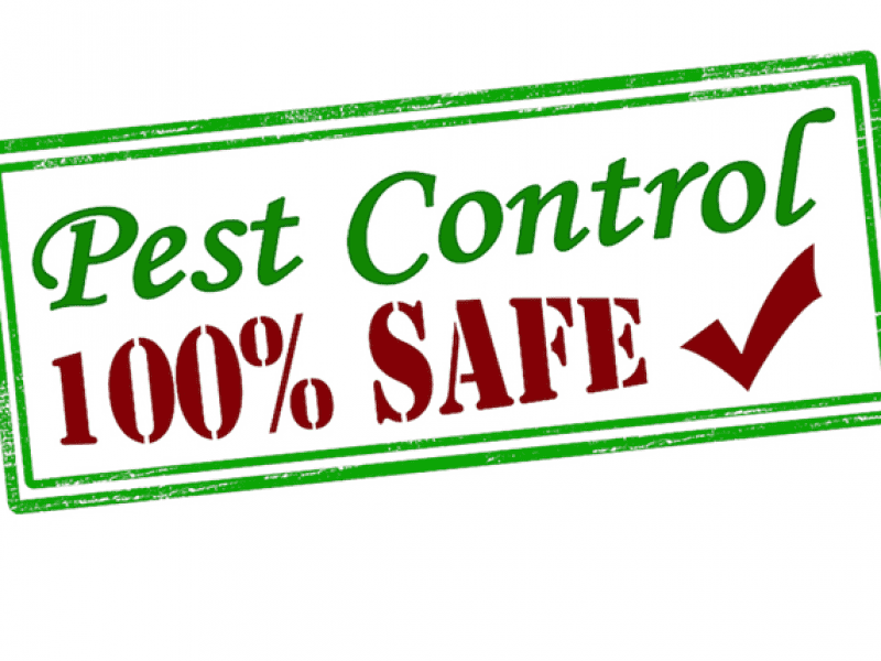 4 Green Pest Control Options