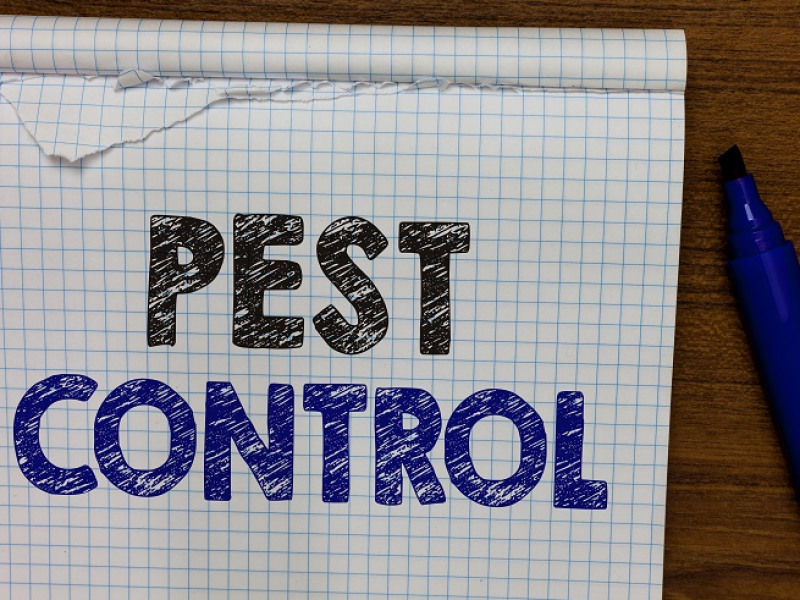 Signs You Have Pest Infestation in your Home