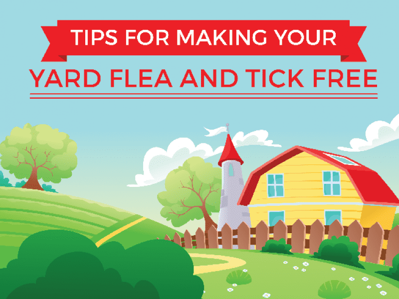 Tips for Making Your Yard Flea and Tick Free