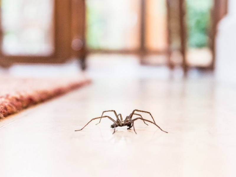 Spider Infestations: All You Need to Know