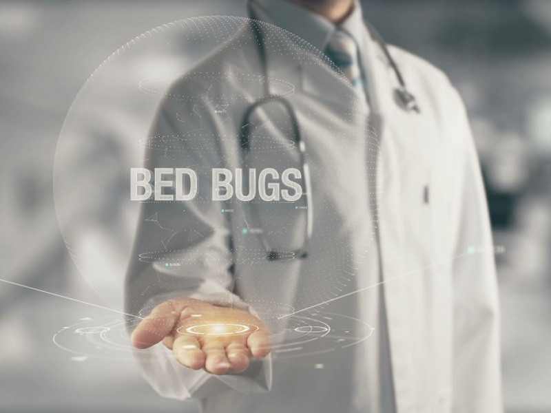 The Rebirth of Bed Bugs
