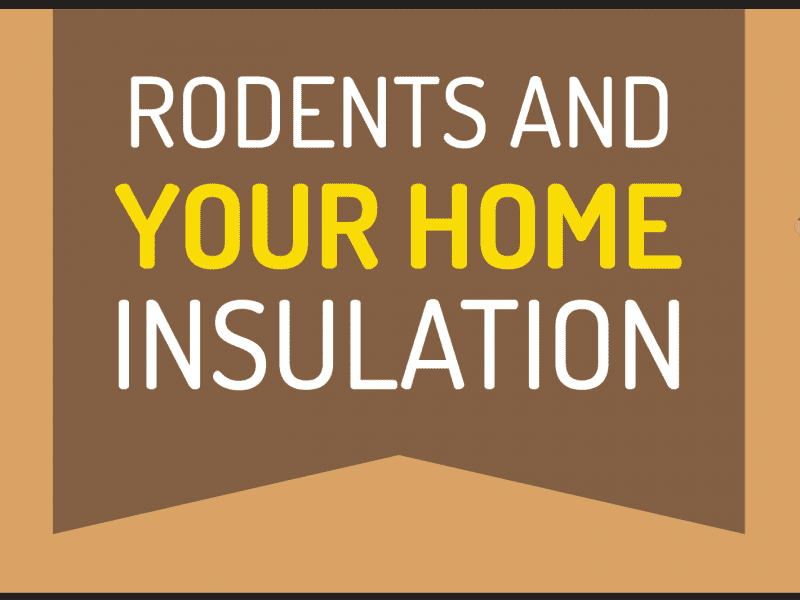 Rodents and Your Home Insulation