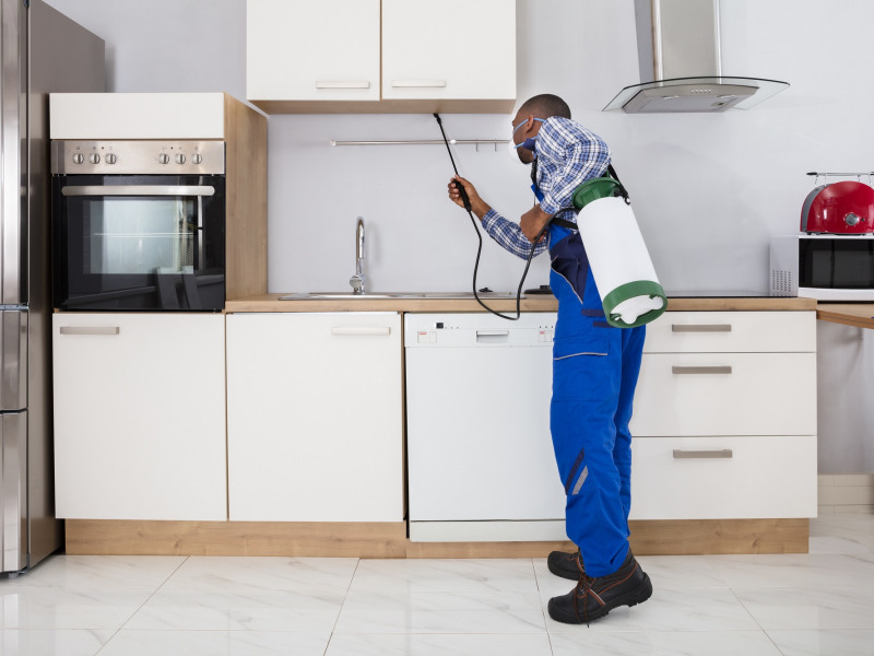 Why Pest Control Is a Year-Round Task
