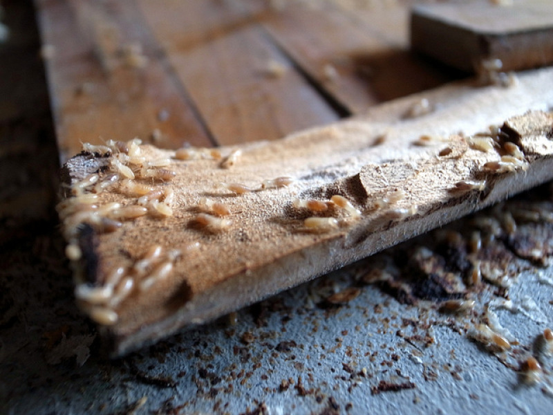 What Exactly Is a Termite Bond?