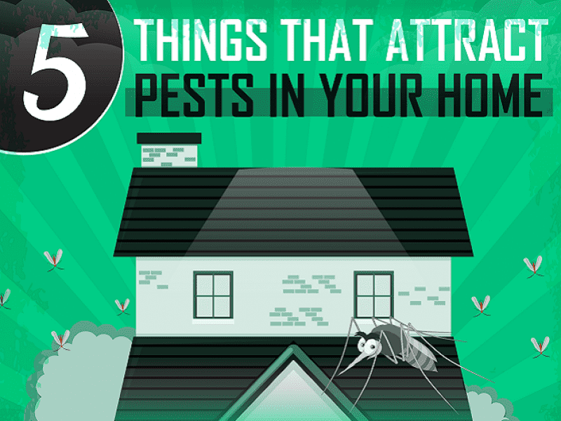 5 Things That Attract Pests in Your Home